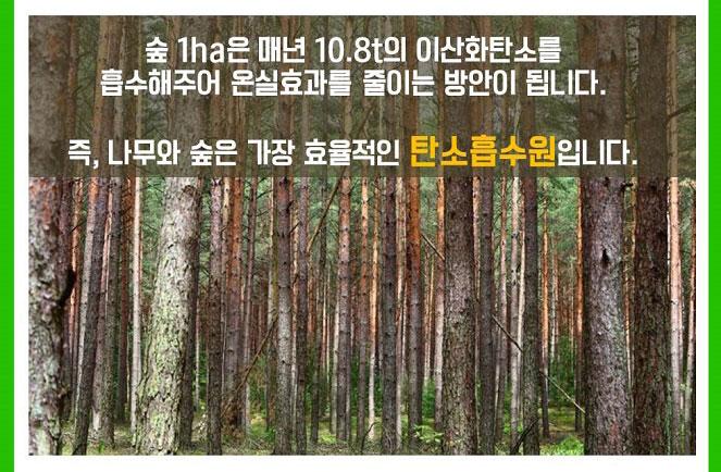 숲 1ha은 매년 10.8t의 이산화탄소를 흡수해주어 온실효과를 줄이는 방안이 됩니다. 즉, 나무와 숲은 가장 효율적인 탄소흡수원입니다.