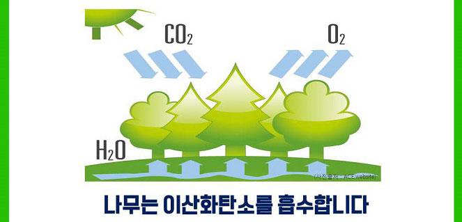 나무는 이산화탄소를 흡수합니다. (사진 : ACE website)