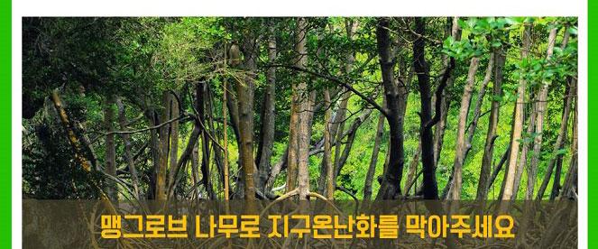 맹그로브 나무로 지구온난화를 막아주세요