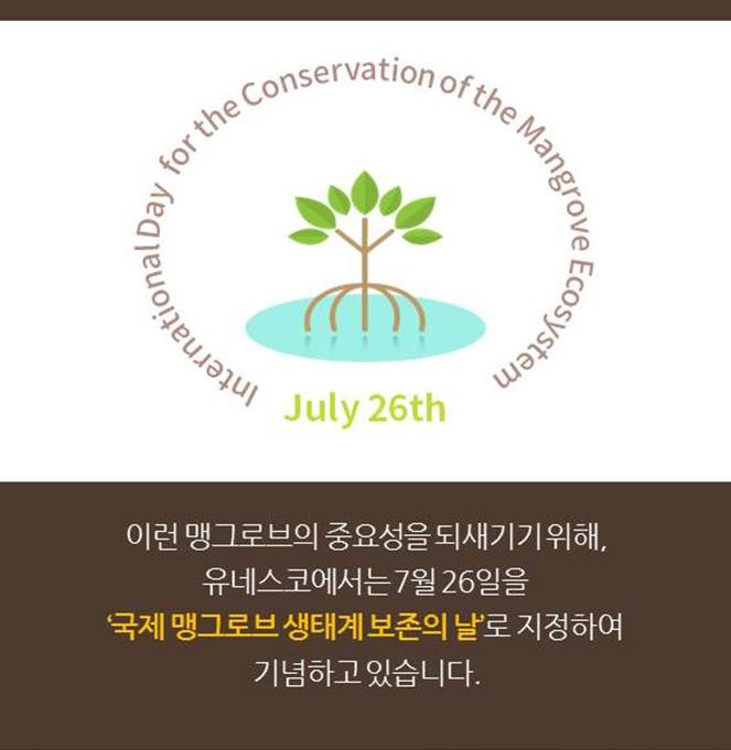 이런 맹그로브의 중요성을 되새기기 위해, 유네스코에서는 7월 26일을 '국제 맹그로브 생태계 보존의 날'로 지정하여 기념하고 있습니다.