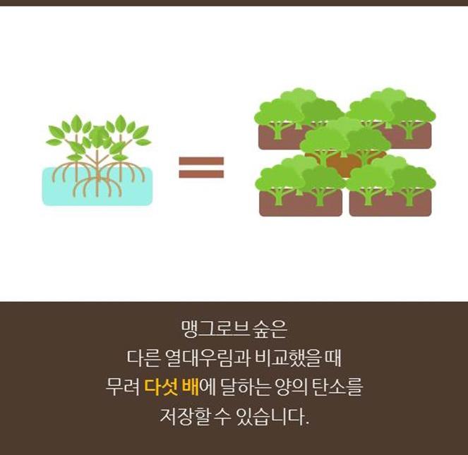 맹그로브 숲은 다른 열대우림과 비교했을 때 무려 다섯 배에 달하는 양의 탄소를 저장할 수 있습니다.