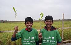 지구온난화 막는 맹그로브 나무 - 사진